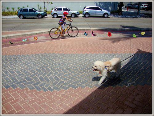 Cachorro e bike