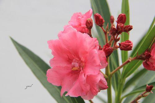 Flor da tarde