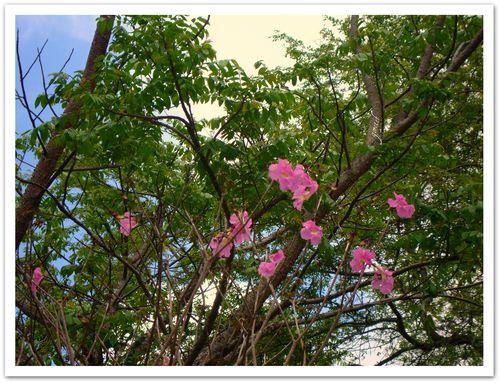 Bica_flora3